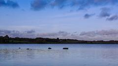 Glenstrup Sø - Kig hen over søen (Walter Johannesen) Tags: glenstrup sø landskab eftermiddag vand landscape