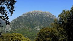SIERRA DEL PINAR CARA SUR (CARLOS CALAMAR) Tags: bosque cadiz pinsapo andalucia landscape wood mountain
