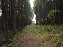 Skulleruds Allé_0211 (mtbboy1993) Tags: skullerudsallé askim rudsmosen rudsmåsan indreøstfold østfold doubletrack trail forest skog moss mose grass gras trees trær norway norge