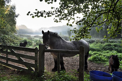 Waiting at the gate. (wimjee) Tags: nikond7200 nikon d7200 afsdx1680mmf284eedvr herfst autumn ochtend morgen paard horse