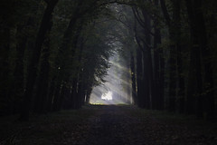 Into the light (Theo Bauhuis) Tags: lochem mist ochtend zon zonnestralen ligth sunlight sunbeam lane laan trees netherlands