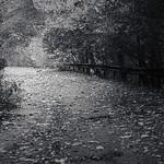 Autumn Years 5 thumbnail
