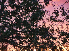 Summer Foliage In Autumn. (dccradio) Tags: lumberton nc northcarolina robesoncounty outdoor outdoors outside sunrise risingsun sky colorful colorfulsky tree trees treebranch treebranches branch branches foliage treelimb treelimbs october autumn fall morning saturday saturdaymorning goodmorning leaf leaves canon powershot elph 520hs beauty beautiful godshandiwork godscreation pretty nature natural