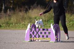 DSC_0124 (klawerjanina) Tags: bunnyjump bunny kani kaniestekisat kanin kaninhoppning