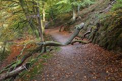 Inderø Skov ved Hald Sø 04 - Slangetræ (Walter Johannesen) Tags: hald sø morgen natur nature morning skov træ tree træer trees wood