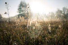 Bosch (27 of 32) (VarsAbove) Tags: kampinos kpn kampinoski park narodowy fog mist mgła morning sunrise dawn wschód polska poland łoś moose sony sonya7 a7ii coffe milkyway