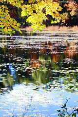 Autumn Colors 2018 - 26 (Stan S. Gallery) Tags: autumn fall fallcolors october colors water waterscape wet wetreflections woods forest pond bog landscape reflections trees leaves waterlillies nature canonrebel