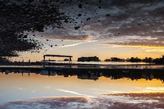 (orestis f) Tags: bonn rhein rhine germany deutschland sunset reflection silhouettes digital fujifilmx100s