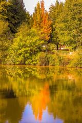 Árvores Outonais (lamartinedias) Tags: chaves agua arvore reflexo rio riotamega tamega outono folhas folha arvores cor cores