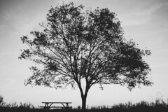 Take a seat (mripp) Tags: art vintage retro old tree nature silhouette sweden contemplation meditation concentration simple things sony alpha 7rii voigtlander nokton 40mm f12