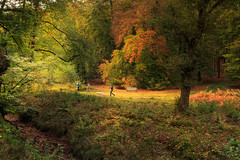 Autumn walk: Veluwezoom (H. Bos) Tags: veluwezoom wandelen veluwe dieren velp onzaligebossen natuur nature autum herfst woods bossen