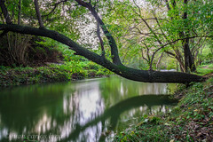 RIU SÉNIA (juan carlos luna monfort) Tags: rio agua arbol verde reflejo montsia tarragona led largaexposicion tripode filtrond1000 nikond7200 irix15 calma paz tranquilidad paisaje