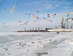 58927062 (aniaerm) Tags: snow ice frost