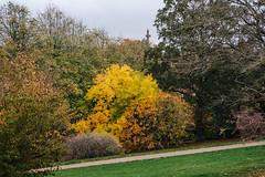 Colourfull (Poul-Werner) Tags: aarhus botanicalgarden botaniskhave danmark denmark 53mm autumn autumncolours efterår efterårsfarver centraldenmarkregion dk