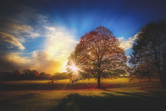 The sun and tree .... (Julie Greg) Tags: sky sun colours canon clouds tree trees grass leaf leafs nature nautre park england kent landscape