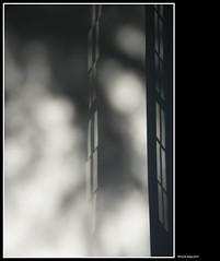 magiche atmosfere (magicoda) Tags: italia italy magicoda foto fotografia venezia venice brenta veneto nikon d750 dslr maggidavide davidemaggi 2018 passione passion tramonto luce light emozione streetlight sunset emotion nuvole clouds rivieradelbrenta stra pisani villa parco park upskirt candid voyeur nowife riflessi reflexion bianco nero white black bn bw blackwhite blackandwhite finestra window blur sfocato atmosfera ombre shadows riviera ghiacciaia ice