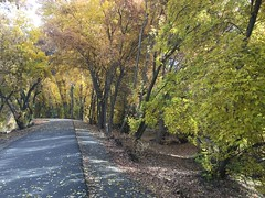 IMG_2767 (August Benjamin) Tags: provorivertrail provocanyonpkwy provoriver provocanyon provo orem utah mountains fall fallcolors trees leaves autumn jogging southfork vivianpark