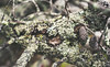 DSCF6799 (aamartin087) Tags: tree wood pine cone bc canada lichen