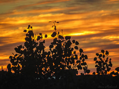 Burlington MA Sunrise_8727 (smack53) Tags: smack53 sunrise morning morningsky paintedsky sky clouds autumn autumnseason fall fallseason burlington massachusetts canon powershot sx530hs canonpowershotsx530hs