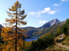 Herbst auf Steirisch / Autumn in Styrian style (rudi_valtiner) Tags: steirersee tauplitzalm totesgebirge alpen alps see lake bergsee mountainlake baum tree lärche larch herbst autumn fall badmitterndorf ausseerland salzkammergut steiermark styria österreich austria autriche latschen krummholzkiefern mugopines pfad path berg mountain landschaft landscape pinusmugomugo larix wald forest traweng wasser water ie