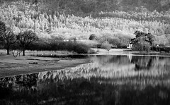 Northern Love (plot19) Tags: derwent water love light landscape lake lakedistrict lakes britain british blackwhite blackandwhite plot19 photography nikon north northern northwest land cumbria trees