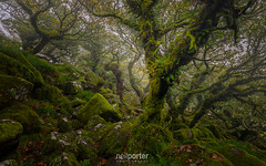 Esoteric Oaks (www.neilporterphotography.com) Tags: mysterious oak stunted wood woodland wistmans wistman dartmoor ancient remote esoteric