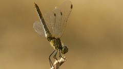 000741-) (andrzejreschke) Tags: insects reptiles plants grass nature butterfly lizard moss flowers beauty beautyofnature