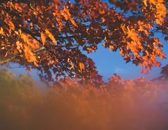 For Real (HW111) Tags: canada ontario autumn condensation leaves orange sky sugarmaple vibrant window smileonsaturday season'sflora