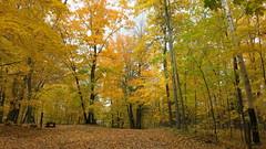 Lac Philippe walk Oct 13, 2018 (Gillian Walker) Tags: lac philippe fall colours leaves trees gatineau park lake