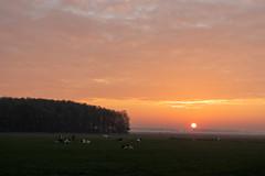 Sunrise Gewande III (Photography by Martijn Aalbers) Tags: sunrise zonsopgang sun zon nature natuur gewande shertogenbosch denbosch noordbrabant brabant thenetherlands nederland canoneos77d ef1740mmf40lusm