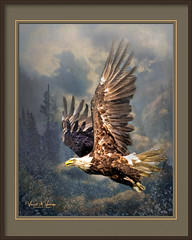 Flying Free (Visions by Vincent) Tags: fantasticnature eagle birds alaska topaz texture greatphotographers ngc