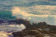 Tide Pools (Starrgalla) Tags: seaweed wet water pacificocean pacific ocean shoreline shore tidal waves wave rockformation rocks rock tidepools tidepool