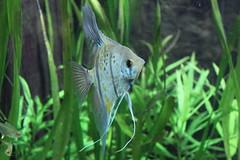 Fish (Las Cuentas) Tags: fish fisch aquarium zoo canon eos 4000d
