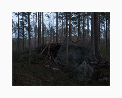 Falun 2018 (Karl Gunnarsson) Tags: g80 panasonic20mmf17 falun dalarna sweden sverige shelter forest woods trees pines rock boulder vegetation dusk twilight