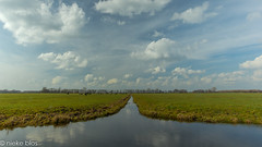 Landscape-34 (niekeblos) Tags: dutch cow animals cows animal sky reflection grass meadow ditch nature symetry canon60d netherlands trees