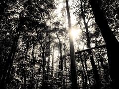 Danser avec le soleil - 04