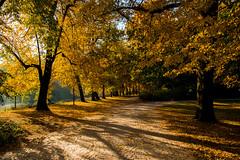 The best season :) (przemnml) Tags: autumn jesień herbst trees drzewa łazienki lazienki poland polska polen warszawa warschau warsaw color kolory nikond3100 nikonsigma