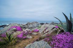 _DSC3935 (@camilografo) Tags: isla negra algarrobo chile
