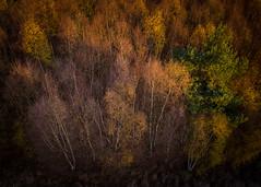 Last Autumn II (Draws_With_Light) Tags: vegetation autumn landscape season skipwithcommon marshland djimft15mmf17asph djiinspire1pro northyorkshire drone tree forest camera aerialphotography scene places abstract