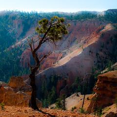 In Canyons 282 (noahbw) Tags: brycecanyon d5000 nikon utah autumn canyon cliffs desert erosion hills landscape natural noahbw rock square stone tree treetrunk