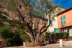 Old tree in St. Tropez (jorrit-pouw) Tags: tree city france