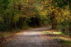 ballade d'automne (Jérôme_M) Tags: canon eos 600d nature chemin ballade sigma 150600 bois forêt soleil sun aquitaine landes seignanx cantegrouille automne natgeo natimages lemondedelaphoto paysage landscape