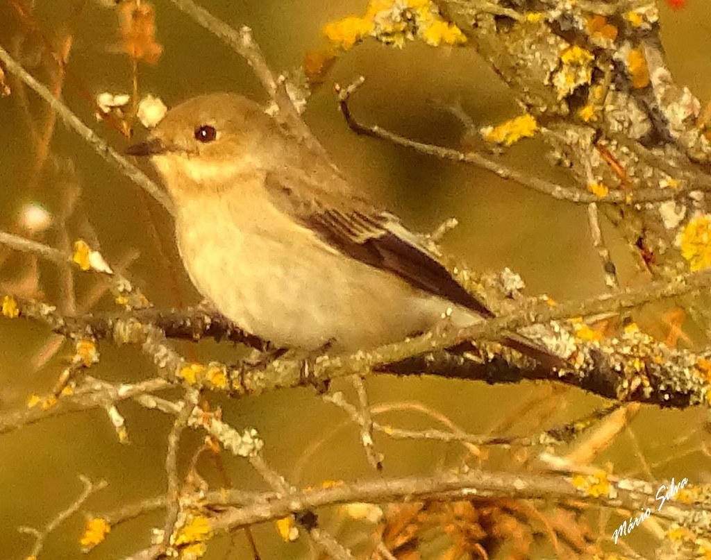 Águas Frias (Chaves) - ... ave entre o emaranhado dos ramos ...