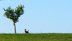 Plantar un árbol, escribir un libro... (alfonsocarlospalencia) Tags: lectura silencio soledad verde mataleñas rojo paisaje concentración compañía santander aislamiento robado minimalismo serenidad placer