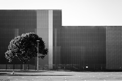 tree behind a fence (fhenkemeyer) Tags: mülheimr geometry empty shadows lines parking fence light tree