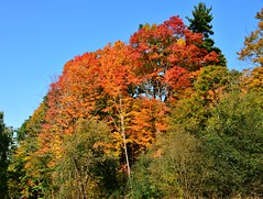 Thomas J. Bata Trail, Wilket Creek Park, Toronto, ON (Snuffy) Tags: thomasjbatatrail donmills northyork toronto ontario canada fall autumn seasons wilketcreekpark