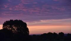 Auf Rindersuche im Morgengrauen; Bergenhusen, Stapelholm (1) (Chironius) Tags: stapelholm bergenhusen schleswigholstein deutschland germany allemagne alemania germania германия niemcy morgendämmerung sonnenaufgang morgengrauen утро morgen morning dawn sunrise matin aube mattina alba ochtend dageraad zonsopgang рассвет восходсолнца amanecer morgens dämmerung himmel sky ciel cielo hemel небо gökyüzü wolken clouds wolke nube nuvole nuage облака baum bäume tree trees arbre дерево árbol arbres деревья árboles albero árvore ağaç boom träd baumsilhouette