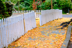 DSCF1594.jpg (RHMImages) Tags: trees fallcolors landscape macro leaves fuji nevadacounty nevadacity xt3 fall fujifilm fence