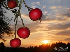 herbstliche Impressionen (skistar64) Tags: morgen morning daham herbst autumn drausen outdoor pisweg kärnten carinthia
