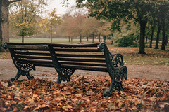 Autumn in London (esdrasbeleza) Tags: autumn fall london londres europe uk britain unitedkingdom leaves brown green victoriapark